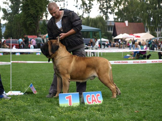 http://www.mastiff.sk/english-mastiff-shows.htm